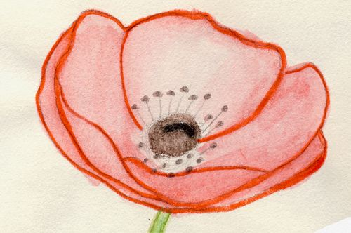 Poppy crop